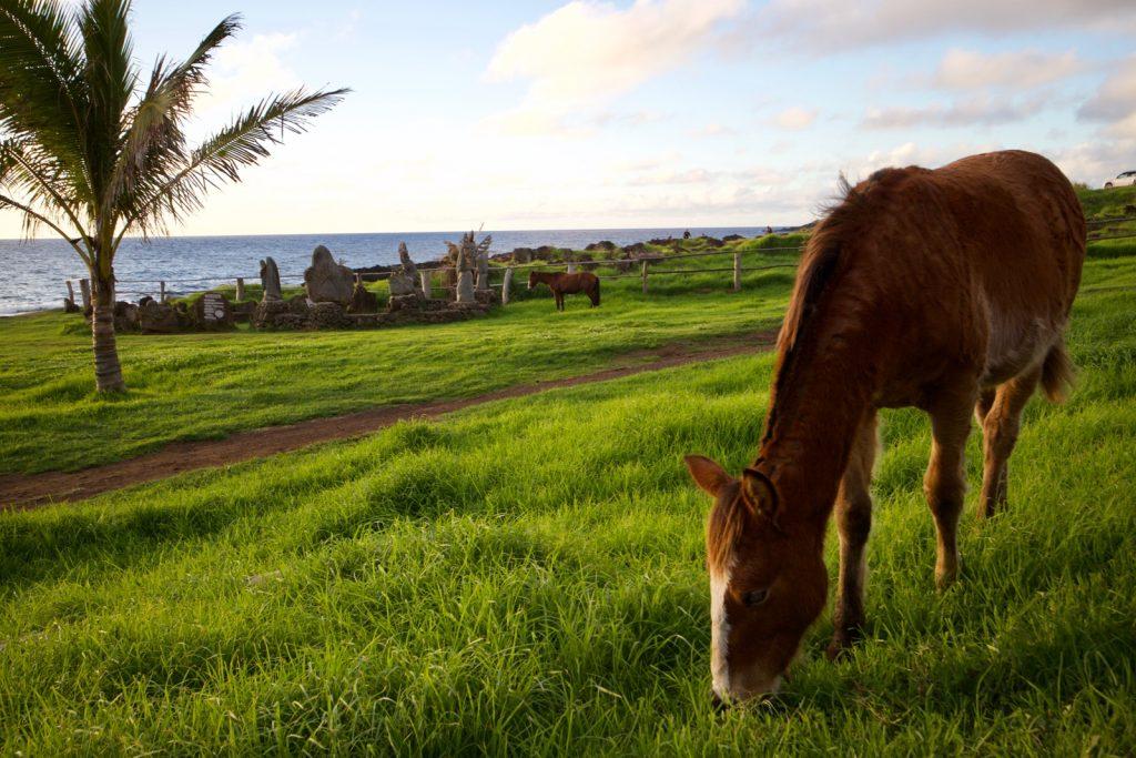 freilaufende Pferde